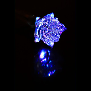 Blue Rose from Beauty and The Beast
