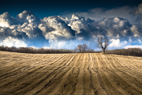 trees light shadow sky mountains tree nature field lines wisconsin clouds canon landscape photography march photo vanishingpoint spring oak midwest view farm bare branches horizon picture 100mm rows short cumulus 5d agriculture distance wi 2009 distant vast expanse fitchburg canoneos5d flickrexplore danecounty canonef100mmf28macrousm ruralcountry portalwisconsinorgselected lorenzemlicka portalwisconsinorg040209