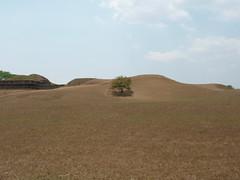 sand(0.0), spoil tip(0.0), aeolian landform(0.0), plateau(0.0), desert(0.0), savanna(0.0), prairie(1.0), steppe(1.0), ecoregion(1.0), soil(1.0), mound(1.0), plain(1.0), hill(1.0), natural environment(1.0), landscape(1.0), badlands(1.0), rural area(1.0), grassland(1.0),
