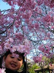 Yuri - Sakura close up