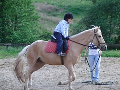 animal sports, equestrianism, english riding, mane, eventing, mare, stallion, hunt seat, equestrian sport, rein, animal training, endurance riding, equitation, horse, horse harness,