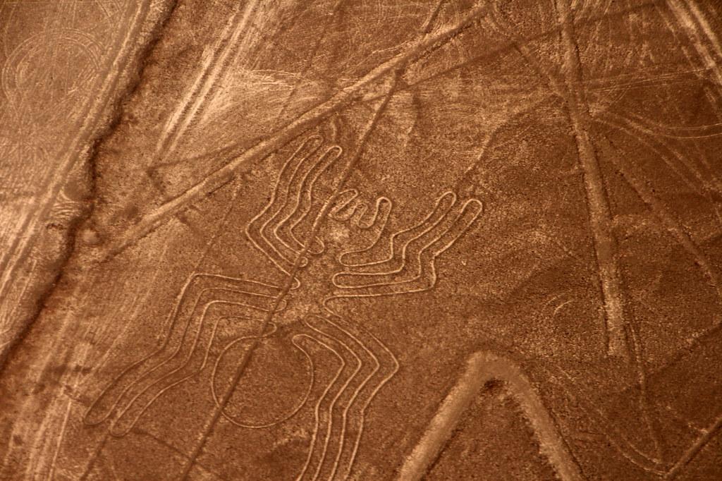 Nazca, araignée