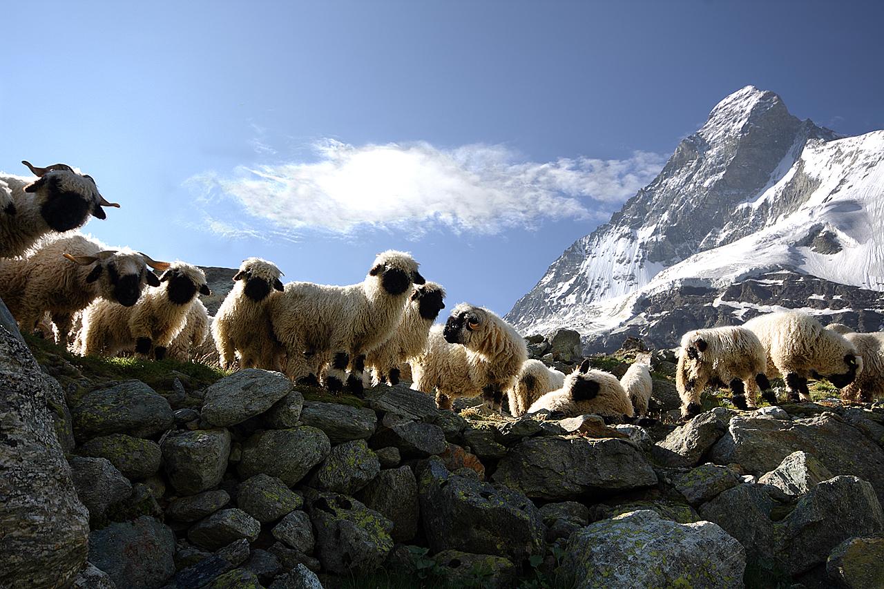 Giant Miracle of Nature - Mount Matterhorn