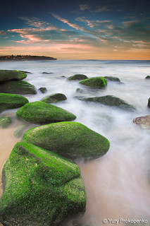 Green Rocks @ Curl Curl Beach