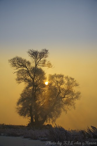 mist tree pine sunrise frosty jilin 吉林 wushongisland 雾从岛