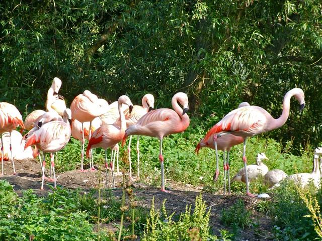 Flamingo nest - photo#20