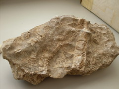 trilobite(0.0), wood(0.0), invertebrate(0.0), mineral(1.0), fossil(1.0), rock(1.0),