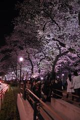 Chidoriga-fuchi Night Sakura 千鳥ヶ淵