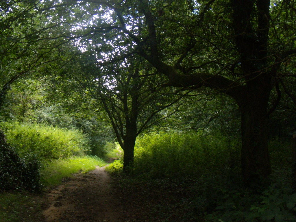 Out of the shade Wanborough to Godalming