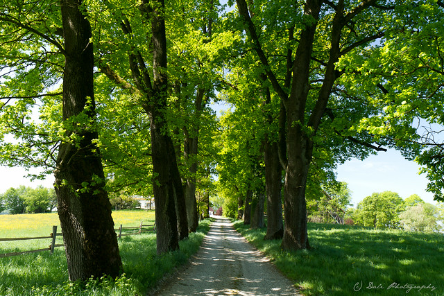 Trees and road
