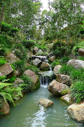 Man Caves Japanese Tea Garden : T u l i p s e a k bukit tinggi photoshoot