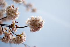 Spring time in white —JamesMalone (Flickr.com)