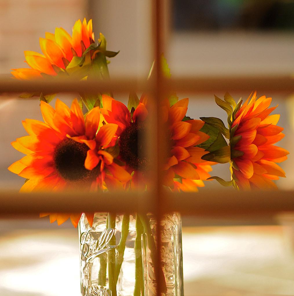 Flowers thru window (2)