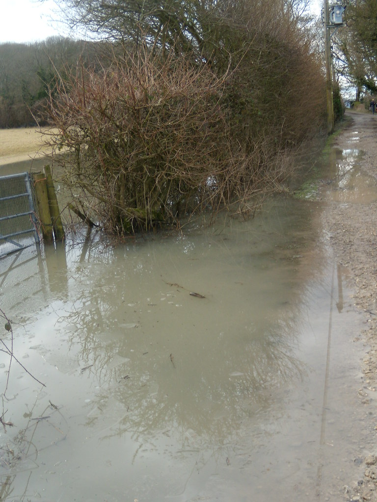 Flooded hedge Luckily the path was still passable. Amberley Circular