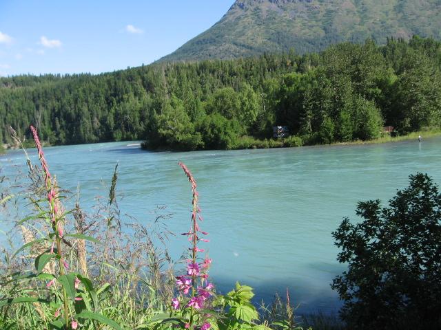 Flickriver photoset 39 alaska kenai river cooper landing for Cooper landing fishing