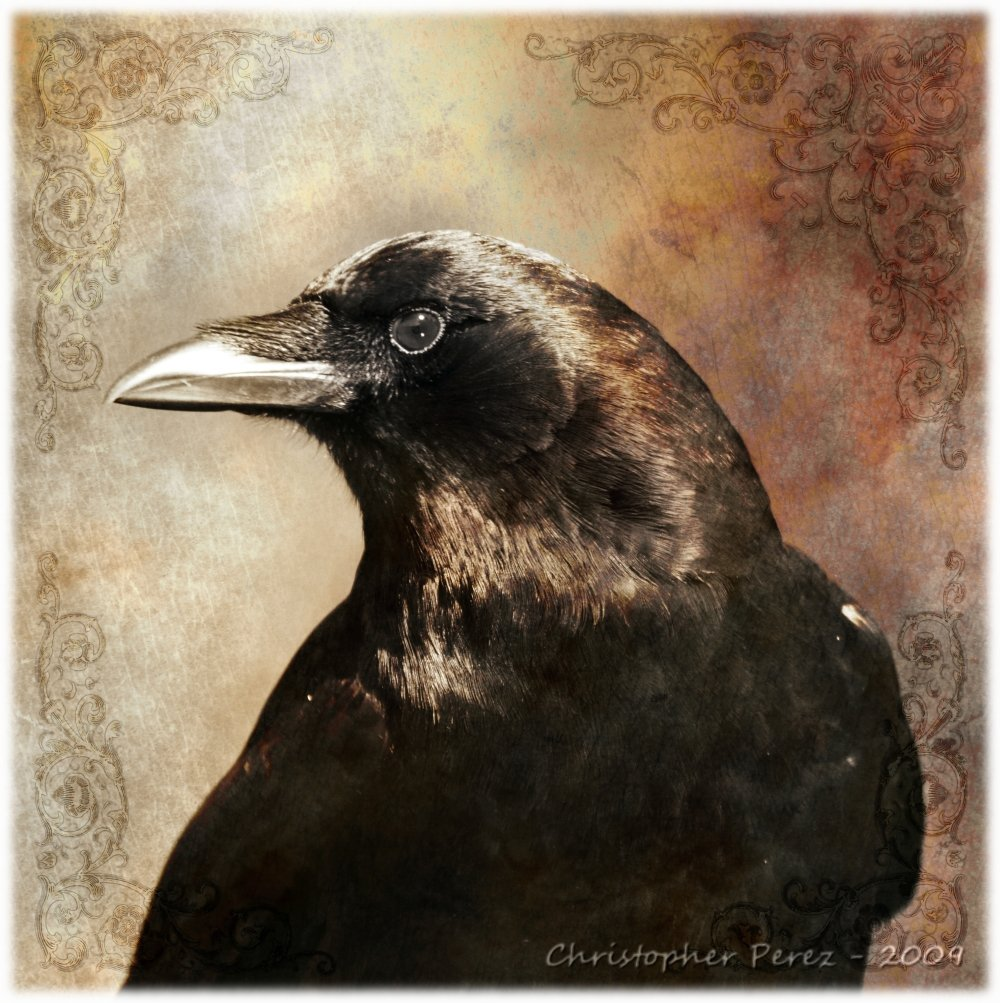 Portraits from the Multiverse - Crow