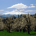 Mt Hood in Spring by JeffreyHecker.com