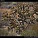 Cactus, Baja, Mexico