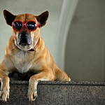 Dog chillin' with red sunglasses