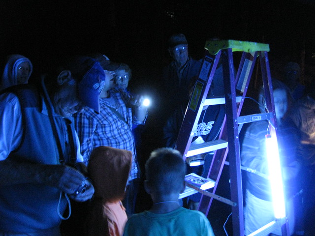 Attracting Night Insects