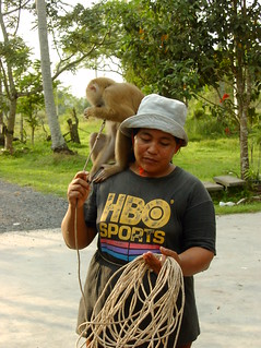 The First Monkey School, Surat Thani, Thailand