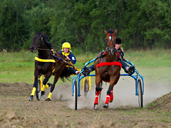 animal sports, racing, equestrian sport, sports, race, horse, horse trainer, race track, harness racing,