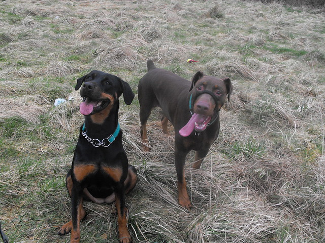My big scary dogs :)   Flickr - Photo Sharing!