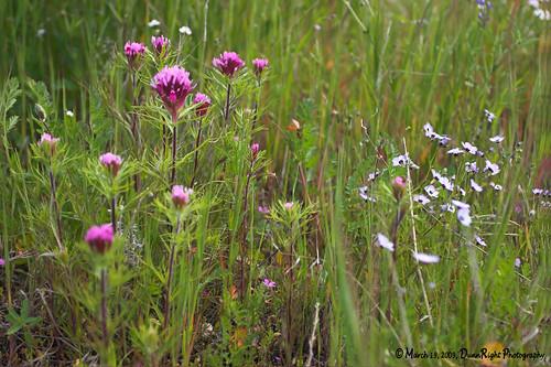 wildflowers kpa naturescall herbdunn dunnrightphotography kerncountyphotographers