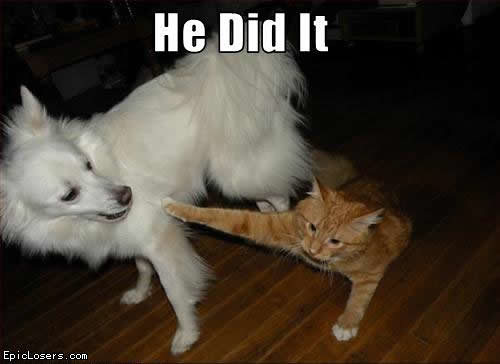 He Did It - LOLCats