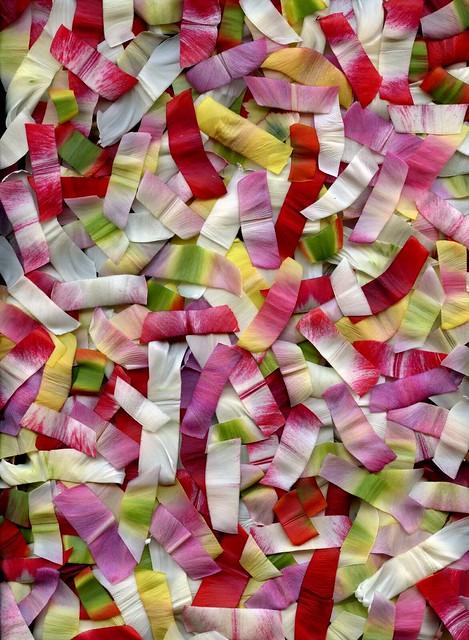 43135 Tulipa