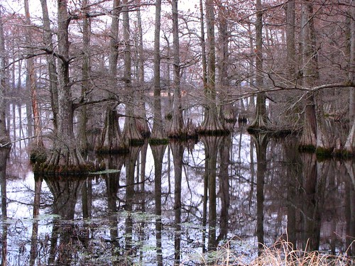 wood old travel trees usa lake reflection green nature water canon landscapes scenery view state south peaceful powershot swamp daytime arkansas cypresses tranquil baldcypress pulaskicounty cypressknees centralarkansas hilllake sx10is waltphotos