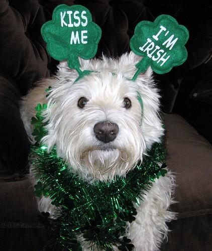 Happy St. Patrick's Day!!  3/52  (Explore #377) by ellenc995