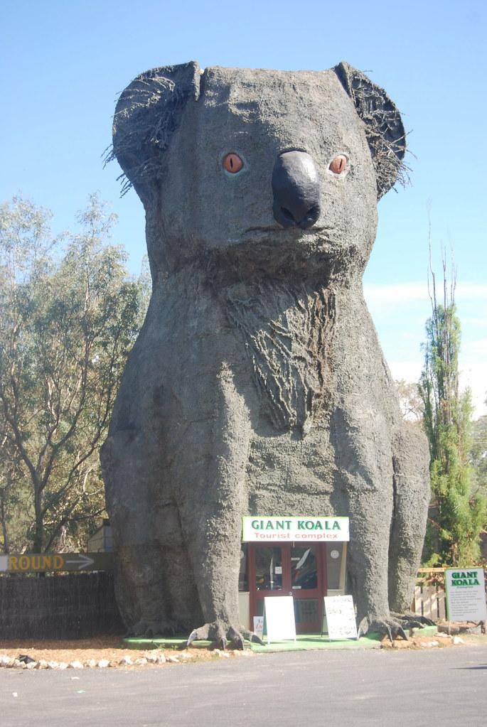 Giant Koala - Dadswells Bridge, Victoria