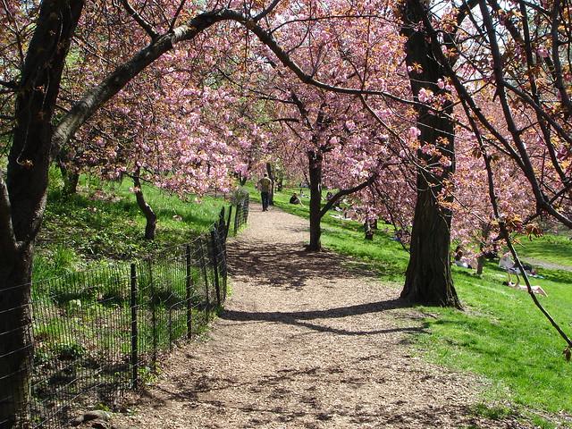 park spring blossom - photo #23
