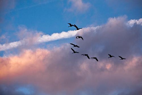 sunrise geese contrails photoblog2009