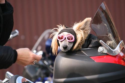 A biker's best friend