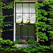 """Small photo of Boston - Beacon Hill """"Ivy, Window and a Rose"""""""