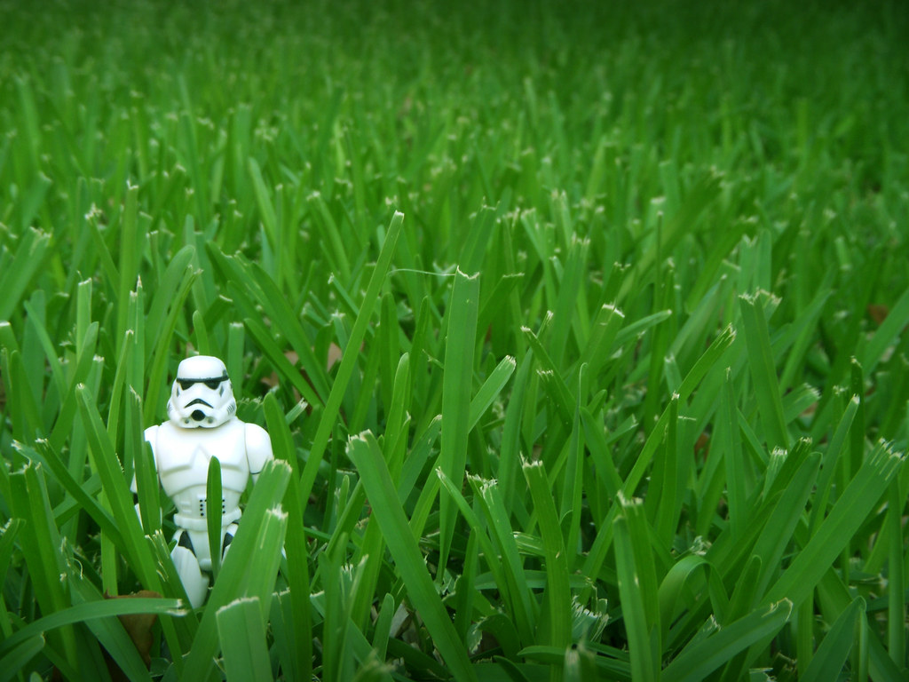 Storm Trooper in the grass