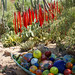 Chihuly Glass Sculptures at Desert Botanical Garden
