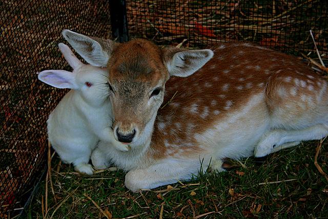 Deer & Bunny Love