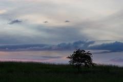 Stonehenge Summer Solstice 2009 - Tree