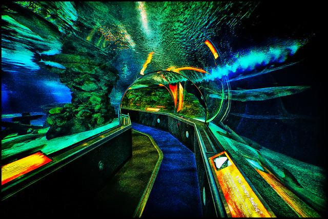 moa underwater adventures flickr photo