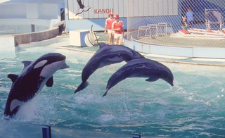 Marineland Orcas and Dolphins