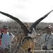 Stretching Wings - Galapagos Island