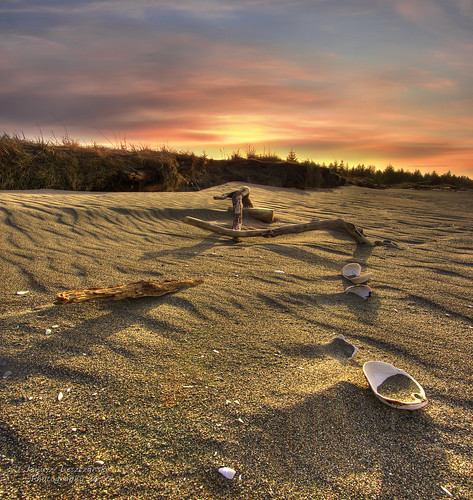 wood sunset beach geotagged island islands sand happiness driftwood shore seashell graham hdr queencharlotte masset haidagwaii janusz leszczynski naturepoetry mywinners abigfave dixonentrance artofimages bestcapturesaoi geo:lat=54031106 geo:lon=132093867 005848 flickr4557364022
