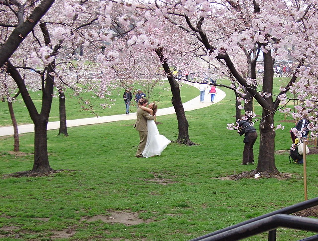 Couple posing for wedding photos amidst cherry blossoms