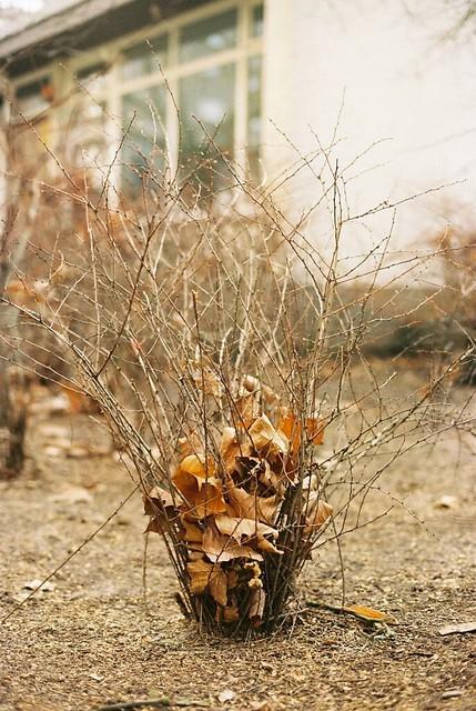Trash bin plant