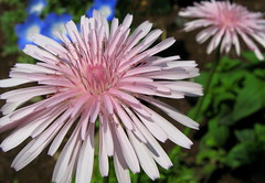 annual plant, flower, plant, macro photography, wildflower, flora, produce, close-up, daisy, petal,