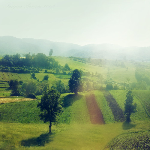 trees people mist tree green nature field square landscape outdoors photography day pattern no hill serbia getty fields greenery agriculture sunrays scenics gettyimages srbija tranquilscene ruralscene beautyinnature highangleview lushfoliage тањицаперовић tanjicaperovicphotography availableforlicensingongettyimages
