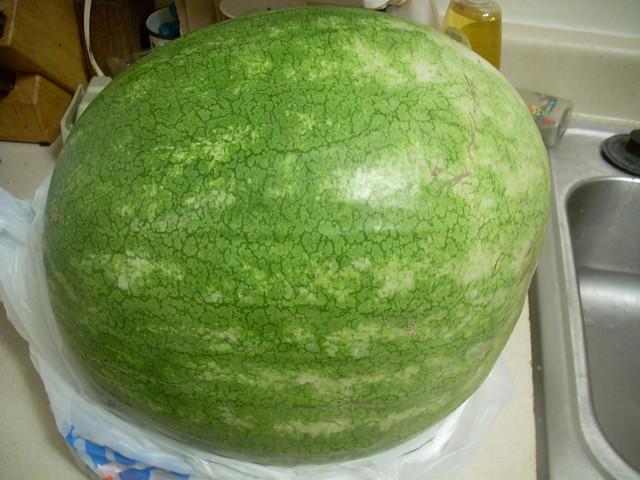 Watermelon Ass 58